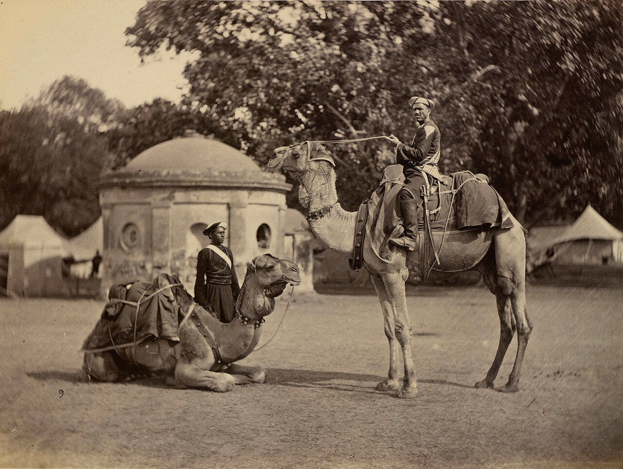 28. Ординарцы принца Уэльского на верблюдах