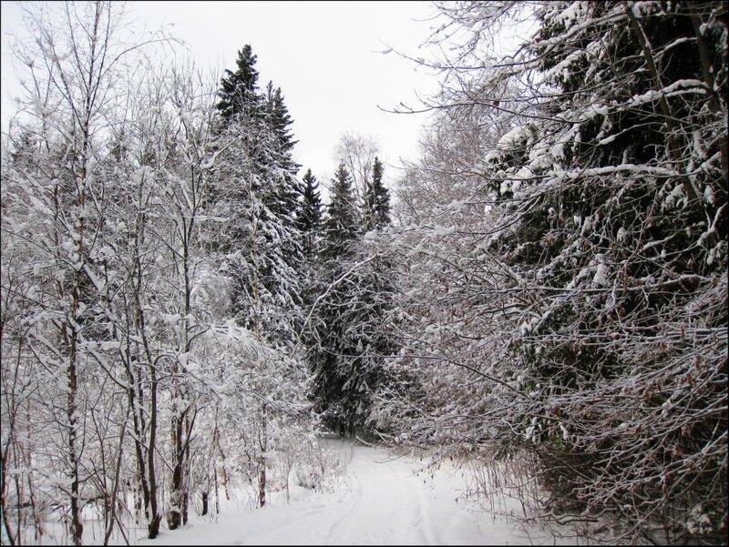 Полянка в зимнем лесу