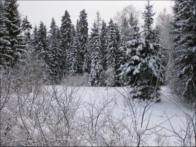 Полянка в лесу зимой