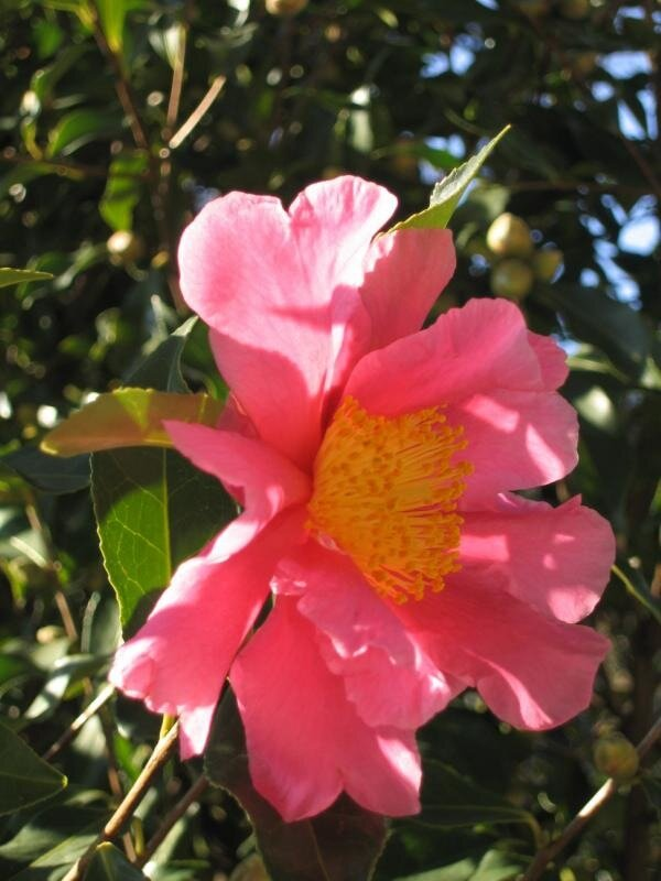 Январский цветок