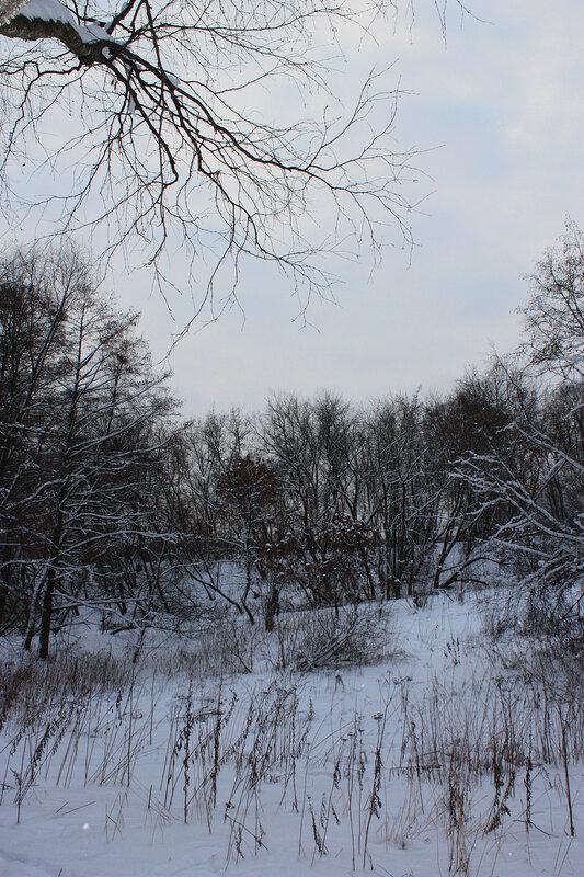 Лес и нежное небо