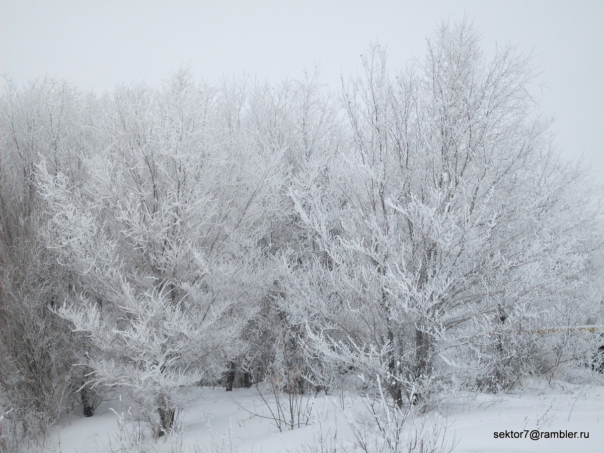 Зима как она есть (Фото Троицка) (Троицк Челябинская область)