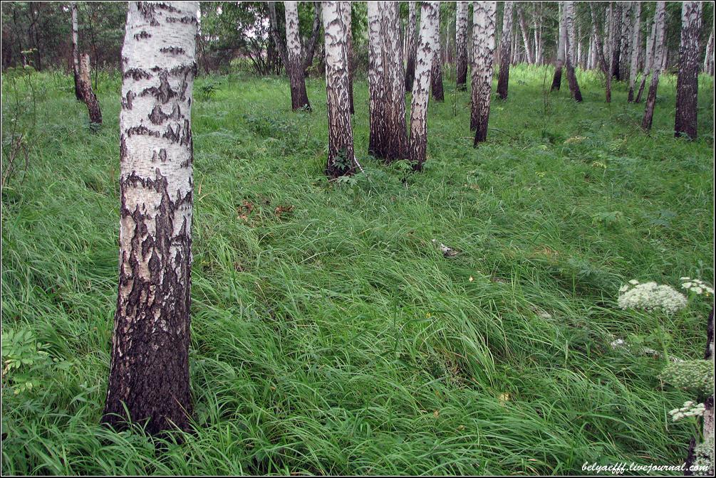 Фото связанные в лесу 26 фотография