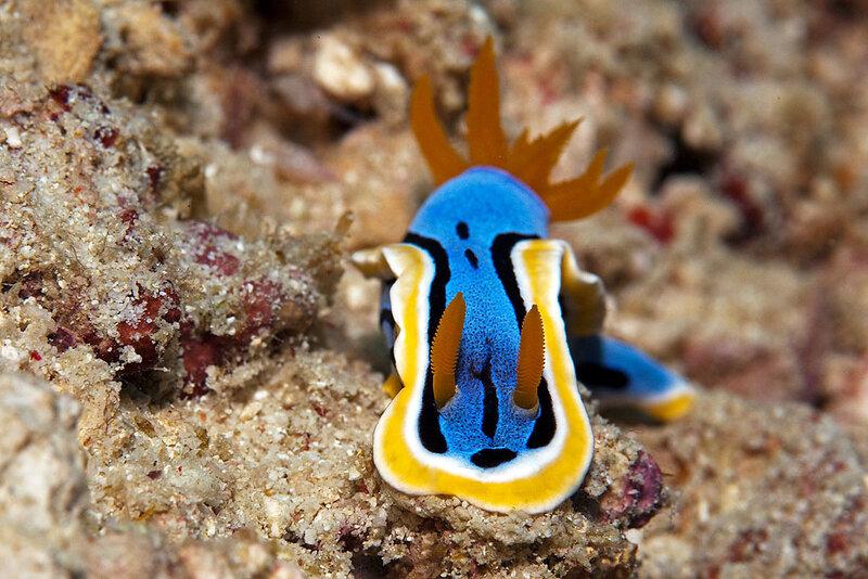 Улитки подводного мира