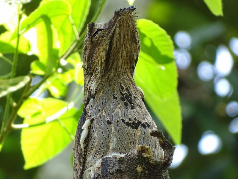 Птицы с самыми необычными защитными механизмами