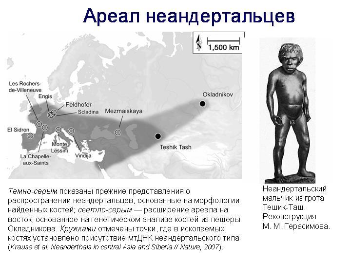 Картинки по запросу находки останков неандертальцев картинки