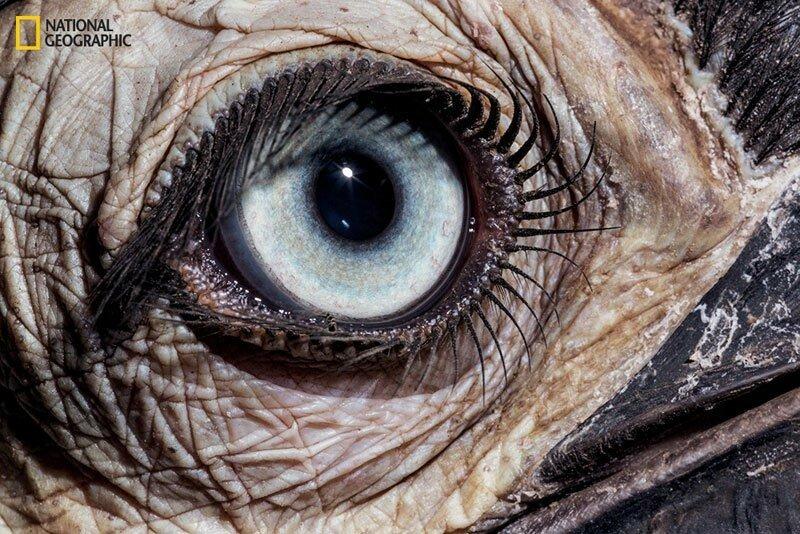 глаза David Liittschwager
