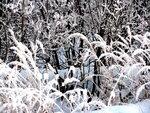 Зима в мещере 2010 год январь