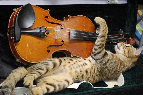 """Подумаешь """"знаменитость"""", я тоже умею """"играть первую скрипку"""""""
