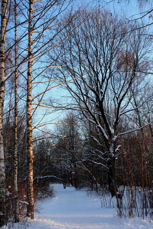 Зимний морозный день