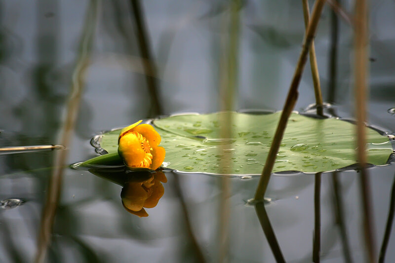 Отражение одиночества......