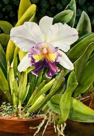 Люблю  я цветы, живущие,  чтоб на воле и с каплей росы. Акварели Theresы Ferguson