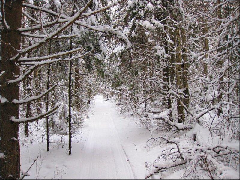 Дорожка в зимнем лесу