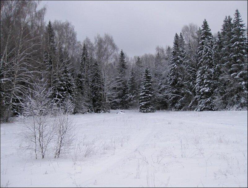 Лес со стороны Закрытой поляны