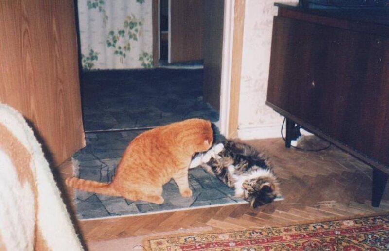 Моша и Яша