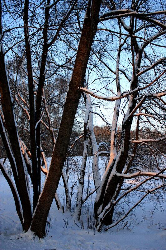 Деревья всолнечных лучах
