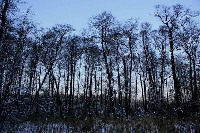 В зимней роще