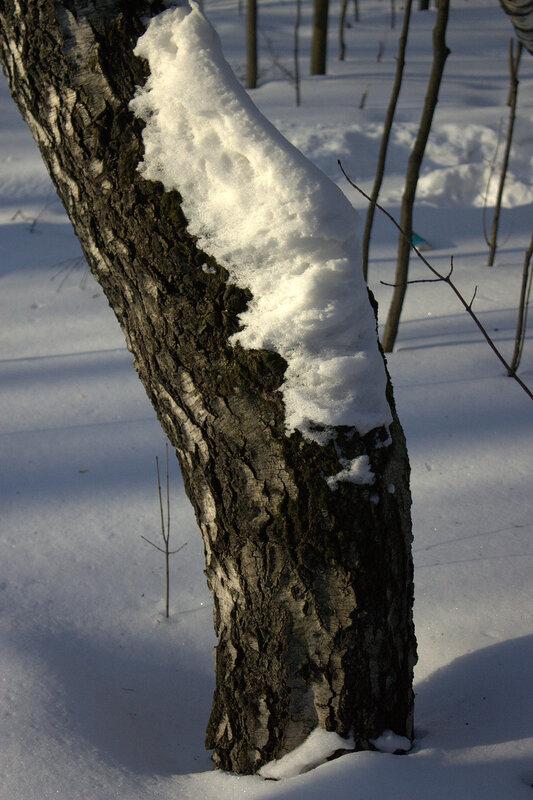 Укрывшись снегом