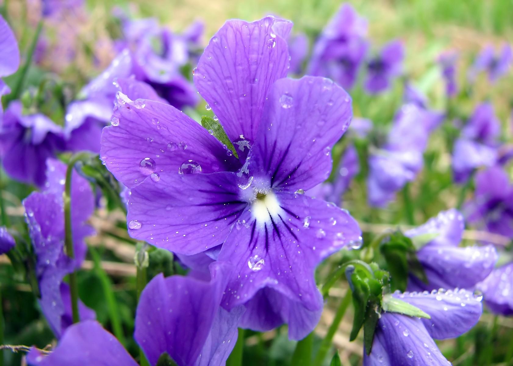 роса на цветке фото: