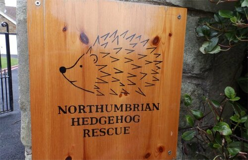 Northumbrian Hedgehog Rescue Trust
