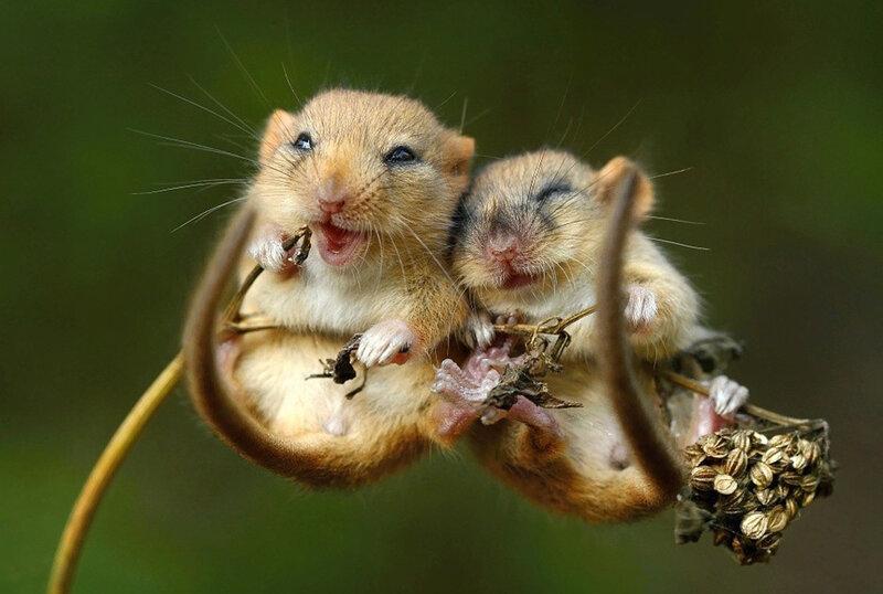 Веселые мышки