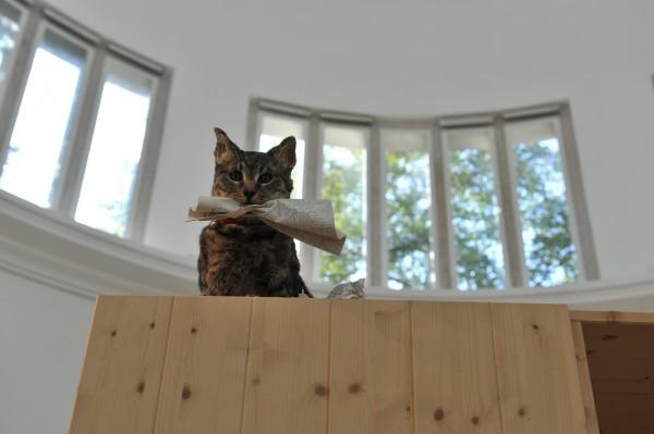 Кошка может стать причиной отставания ребенка в развитии