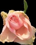 priss_cupid_rosepink2.png