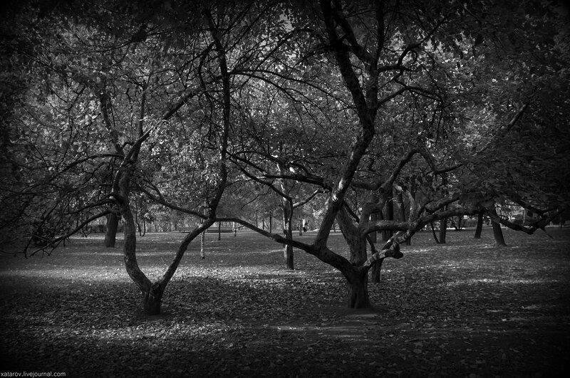 Парк близ Новодевичьего монастыря