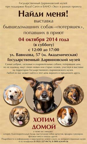 Музей Дарвина и приют ЭКО Бирюлёво, Москва, 4 октября