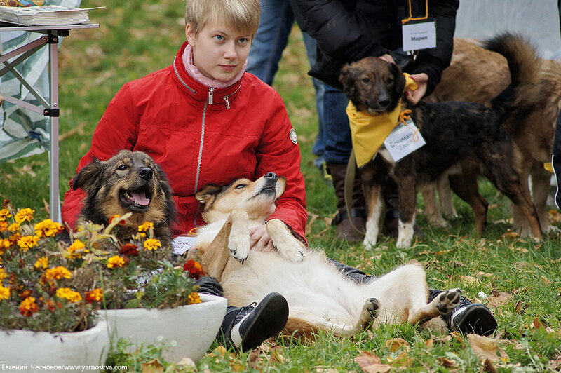 Осень. Фестивальный парк. Собаки. 04.10.14.02..jpg