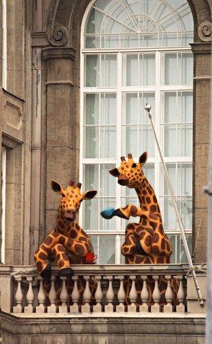 Финские жирафы за чашкой чая