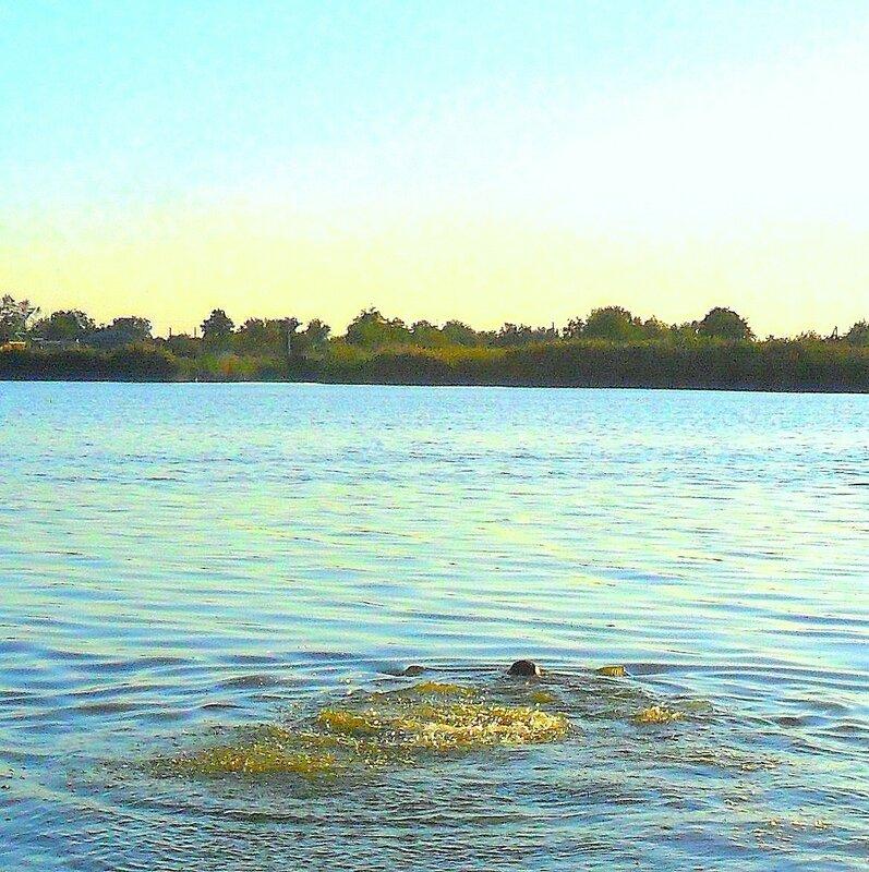 В реке ... SAM_3392 - 1.JPG