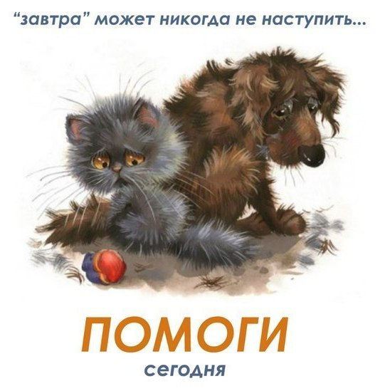 Помогите выжить котёнок - калека
