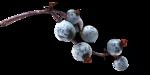 ldavi-fallingleavesautumntea-elderberries4.png