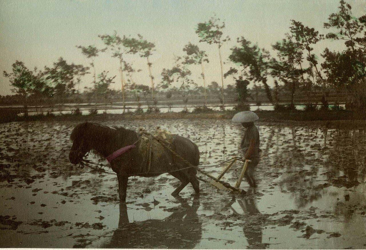 На рисовом поле