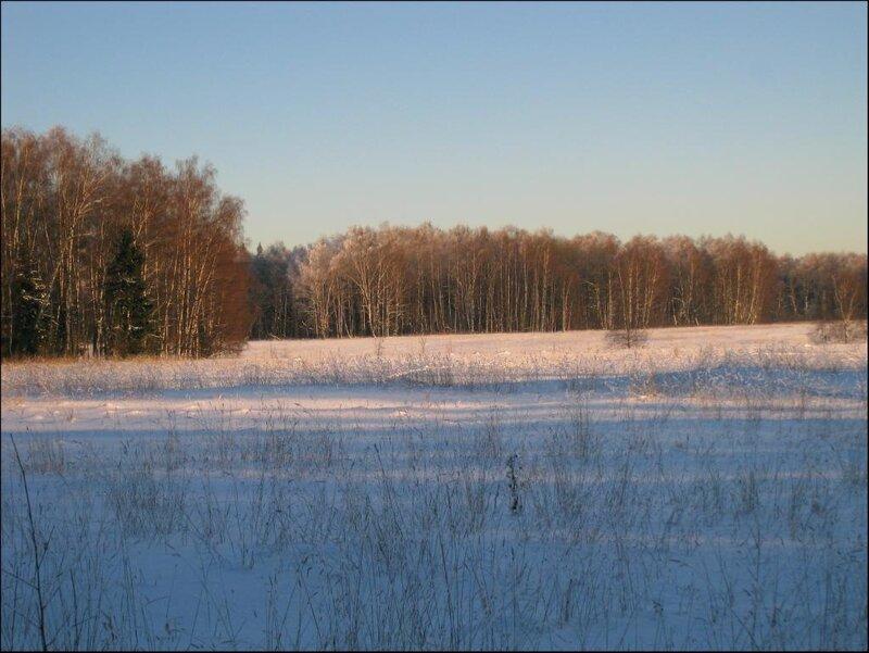 Опушка леса (Комариха) на Протасовском поле