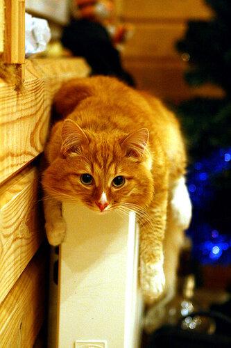 Котенок Хват на батарее