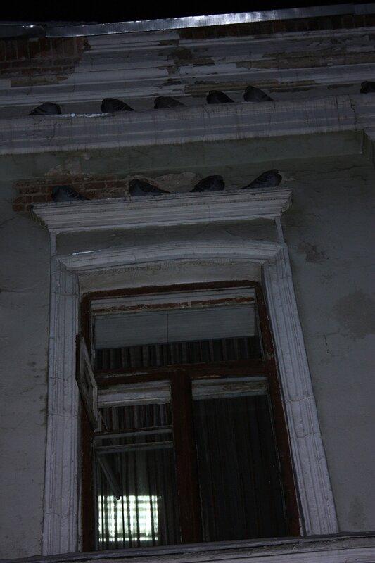 Незаконный снос техникума на Хитровской площади. Голуби, безжалостно лишённые своих деток и крова, ночуют на морозе