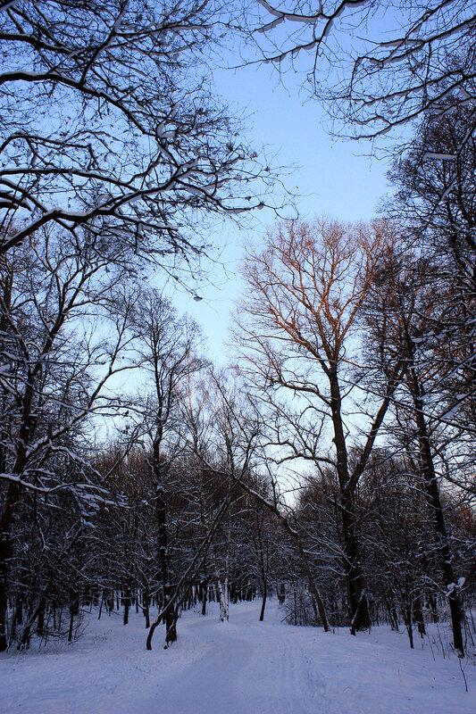 По дороге в лес