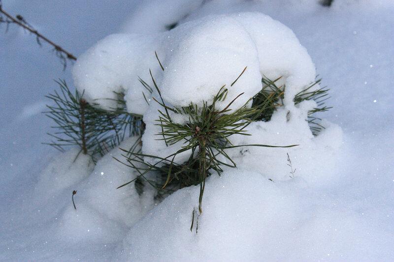 Малышки в снегу