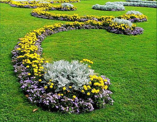 Какие цветы посадить на клумбе и как