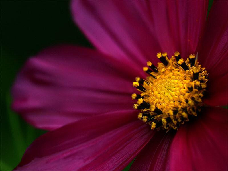 Цветочное макро от Jack Crockett