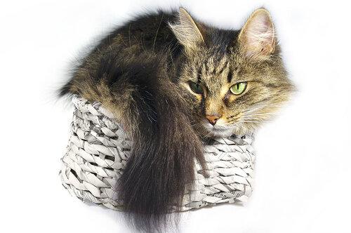 Кошко в корзинке