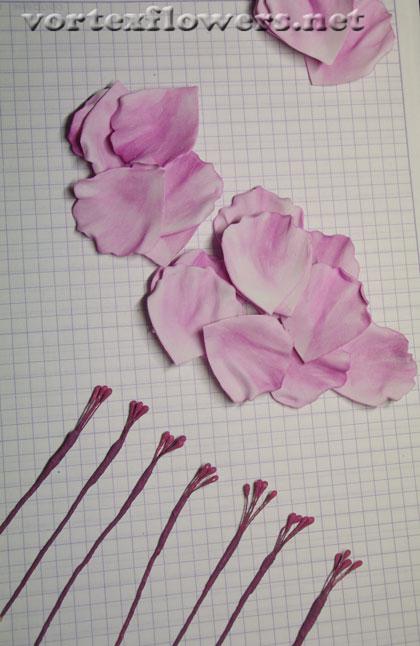 роза Остина мк