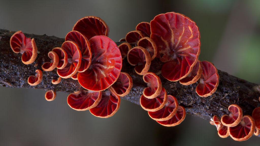 Стив Эксфорд: Красивые фотографии грибов Австралии 0 165cc0 c7b2feb2 orig