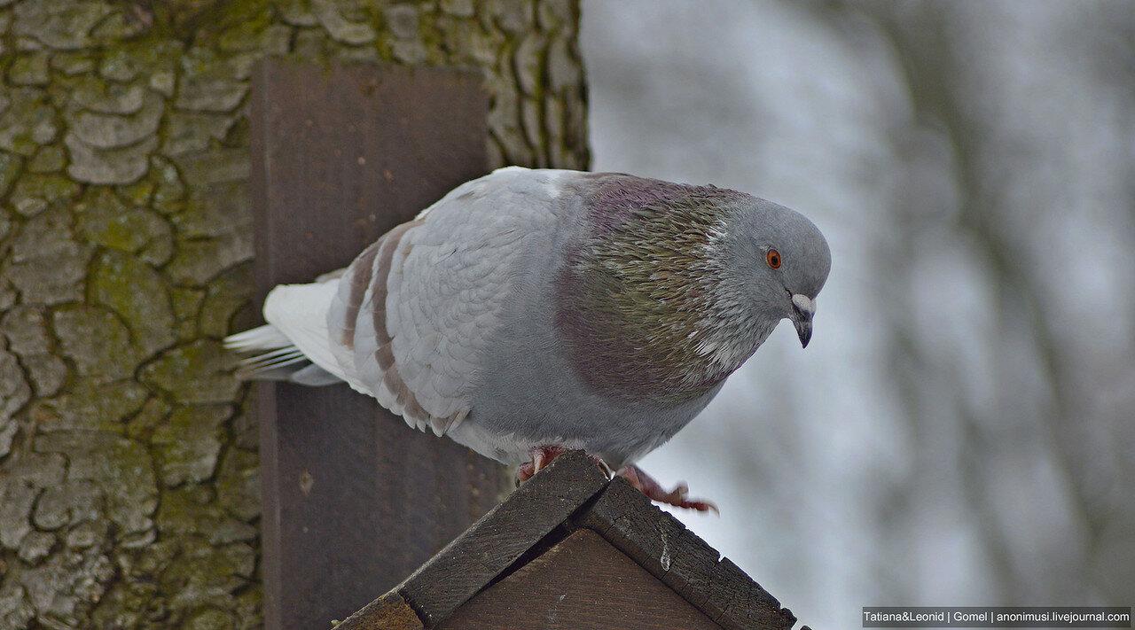 Птицы в Гомельском парке