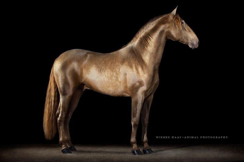 Эмоции владельцев собак во время подготовки к выставке. И красивые фотографии лошадей!