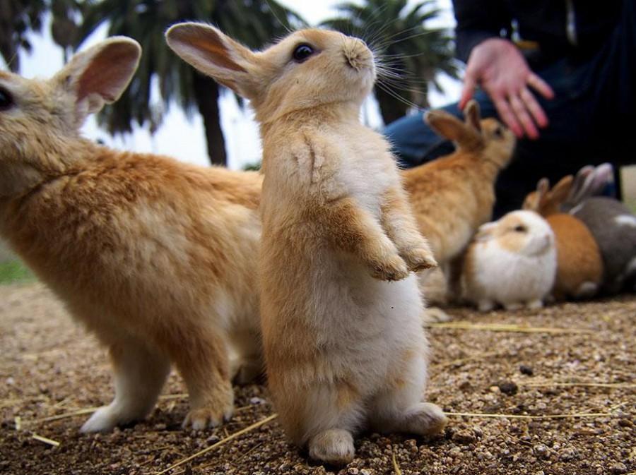 Способность быстро размножаться позволила этим ушастым созданиям расплодиться до невероятного количе