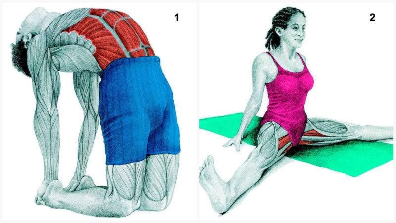 Как правильно растягивать мышцы. (17 фото)