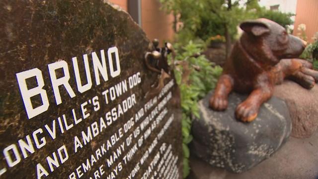 В Лонгвилле настолько любят Бруно, что даже назначили его городской собакой и послом, а также постав